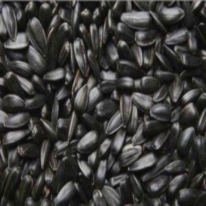 Floarea soarelui neagră